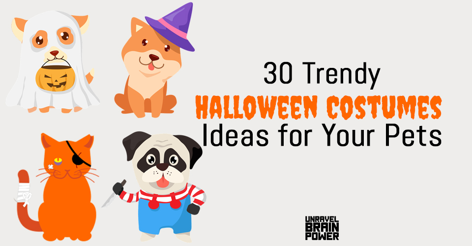 30 Trendy Halloween Costumes Ideas for Your Pets